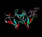 Oxytocin-neurophysin